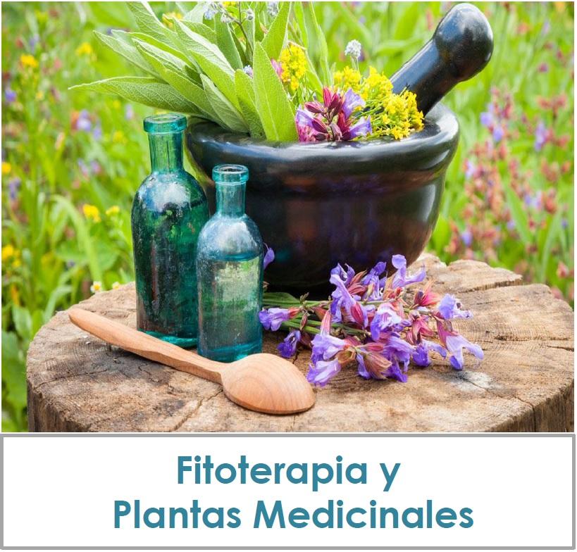inicio_fitoterapia16