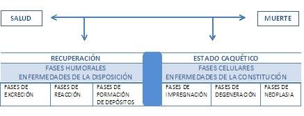tabla homotoxicologica