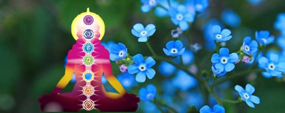 chakras y flores bach
