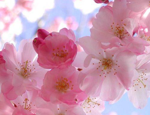 Eficacia del curso de Flores de Bach